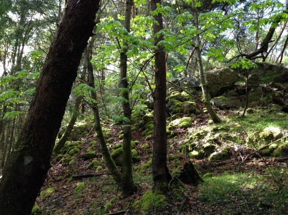 Nature as medicine
