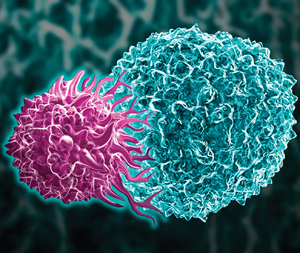 Ilustration of a cytotoxic T cell (purple), also called a CD8 T or killer T cell, investing a tumor cell.